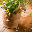 Chamomile. — Stock Photo