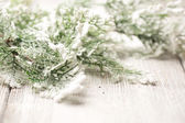 Christmas trees. — Stock Photo