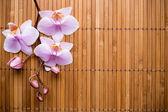 Orchid. — Stockfoto