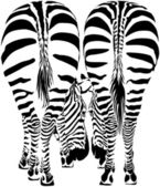 Two zebras eating (vector image) — Stock Vector