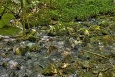 小溪 2 — 图库照片