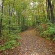 Stock Photo: Fall pathway 57