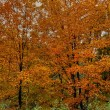 Colorfull fall trees 44 — Stock Photo