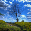 Stock Photo: Single Tree 45