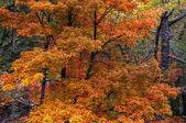 Colorfull herfst bomen 18 — Stockfoto