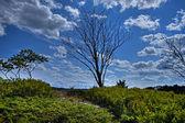 Single Tree 46 — Stock Photo