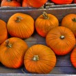Pumpkin crate 68 — Stock Photo
