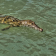 River crocodile 31 - Stock Photo
