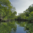 Stock Photo: Tropical river 94