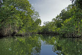 Tropical river 94 — Stock Photo