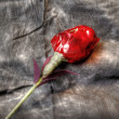 Stock Photo: Hand made rose