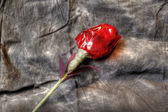 Hand made rose — Stock Photo