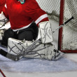 Stock Photo: Goalie butterfly 84