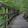 Stock Photo: Wooden path 76