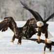 Flying bald eagle — Stock Photo #38283349