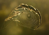 Spiderweb background — Stock Photo