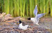 Flying gull — Stock Photo