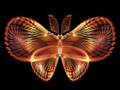 Butterfly Design — 图库照片