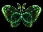 Butterfly Visualization — Stock Photo