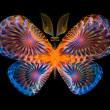 Vibrant Butterfly — Stock Photo