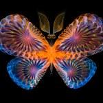 Vibrant Butterfly — Stock Photo