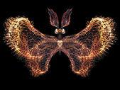 Petals of Butterfly — Stockfoto