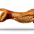 Leopard in a jump. Illustration. — Stock Photo
