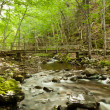 Stock Photo: River flows through forest in backgrond is bridge