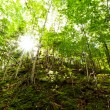 Sunlight penetrates green deciduous woodland — Stock Photo