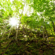 Sunlight penetrates green deciduous woodland — Stock Photo #14137320