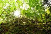 Solljus tränger gröna lövfällande skogar — Stockfoto