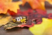 LOVE ring — Stock Photo