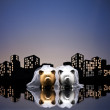 Metropolis City lesbian piggy bank civil union — ストック写真
