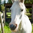 White horse in the autumn sun — Stock Photo