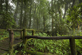Bridge road to the fog jungle forest — Stock Photo