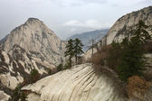 Rock dağları ve göknar — Stok fotoğraf
