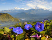 Mountain landscape with flowers — Stock Photo