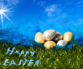 Easter eggs on the grass and plumelet — Stock Photo