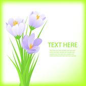 Crocus flower.spring background — Stock Vector