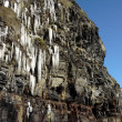Stock Photo: Thawing cascade of icicles on cliff face