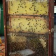 Stock Photo: Bee hive in honey stall at farmers market