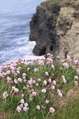 Flores silvestres al borde de acantilados — Foto de Stock