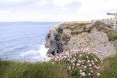 粉红色爱尔兰野花的悬崖边缘上 — 图库照片