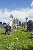 Gamla keltiska kyrkogård med blommor — Stockfoto