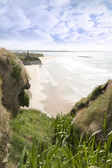 Flora view from the top of the cliffs in Ballybunion — Stock Photo