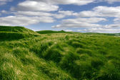 Tall green grass on the dunes of Ballybunion golf course — Stock Photo