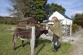 Femelle touristique dans une ferme, nourrir les ânes — Photo