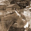 Irish donkey with its head over the fence — Stok Fotoğraf #33277303