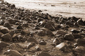 Sepia rocky coastline of a Irish beach — Stock Photo