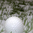 Stock Photo: Single golf ball in snow